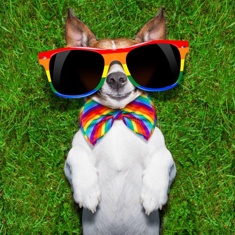Очень смешная собака гомосексуалиста стоковое фото rf