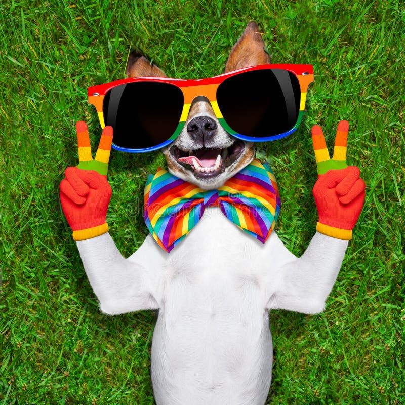 Очень смешная собака гомосексуалиста стоковые изображения rf