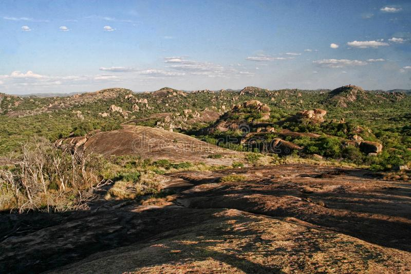 Очень специальная вегетация на утесах национального парка Matopos, Зимбабве стоковое изображение rf