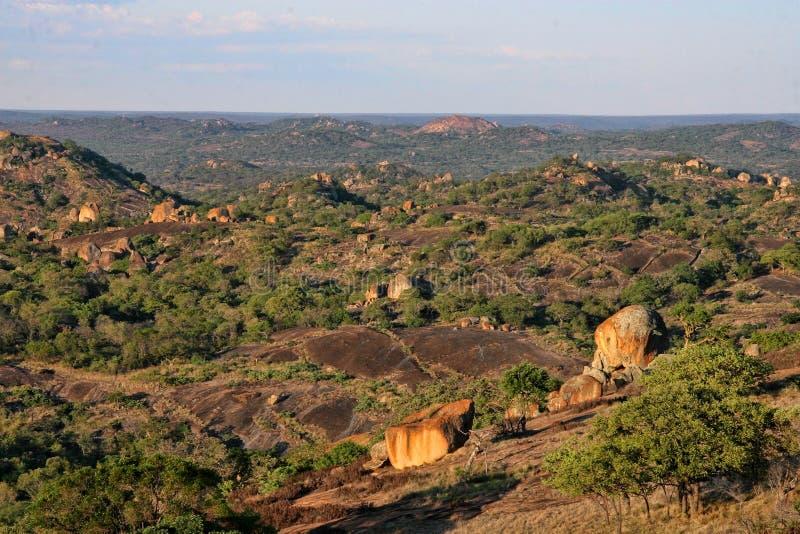 Очень специальная вегетация на утесах национального парка Matopos, Зимбабве стоковое фото