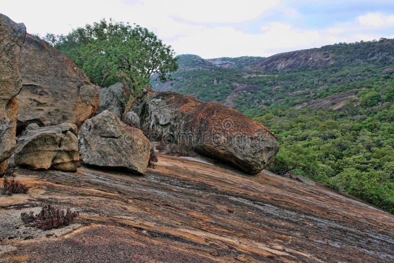 Очень специальная вегетация на утесах национального парка Matopos, Зимбабве стоковые фотографии rf