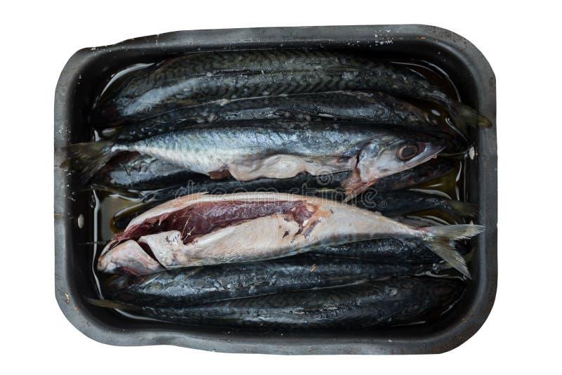 Очищенные рыбы моря подготовленные и готовые быть сваренным на гриле Очищенные рыбы моря в баке изолированном на белой предпосылк стоковые изображения rf