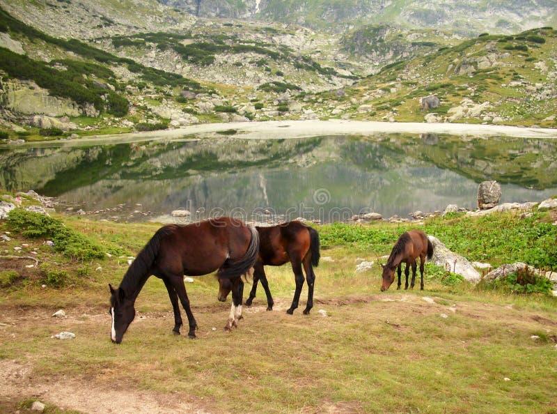 2 лошади одичалой стоковая фотография
