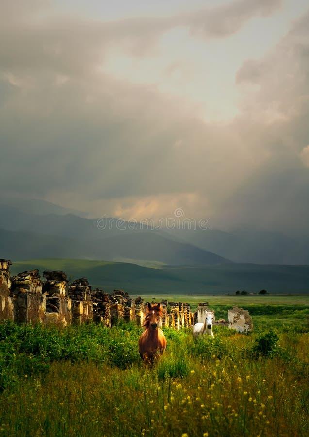 лошади одичалые стоковая фотография