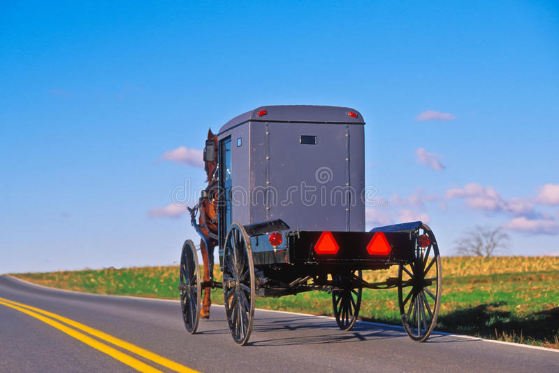 лошадь багги amish стоковое изображение rf