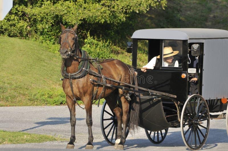 лошадь багги amish стоковые изображения rf