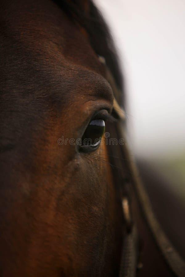 лошадь глаза элемента конструкции стоковое изображение