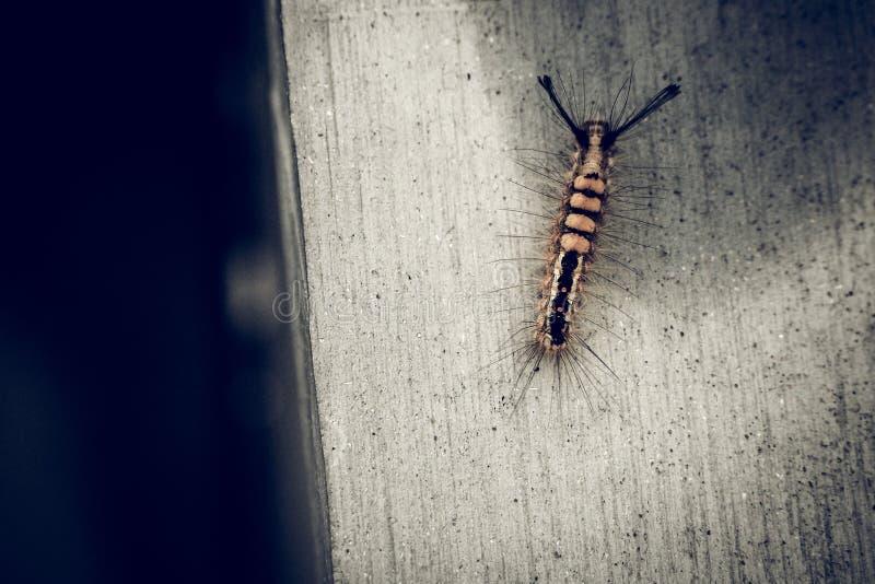 Ошибка насекомого гусеницы на предпосылке природы стены concret деревенской стоковые фотографии rf