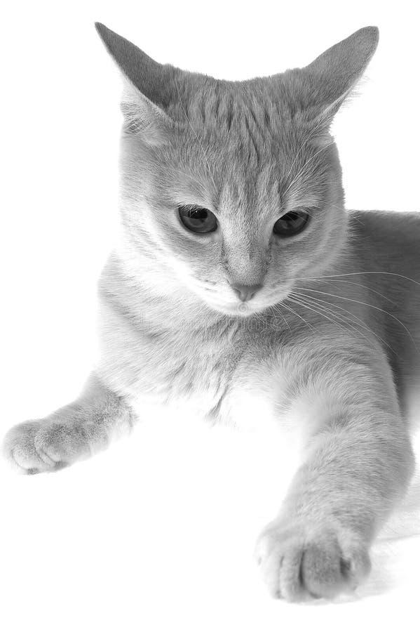 ощупывания котов стоковая фотография rf