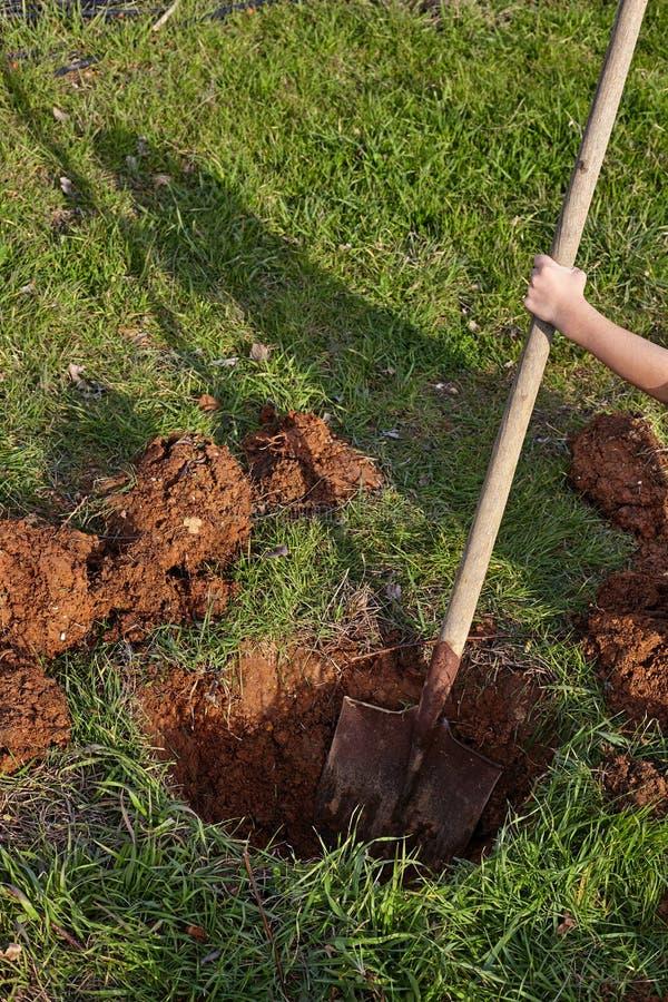 Оягнитесь раскопки с лопаткоулавливателем отверстие для посадки деревьев стоковое изображение rf