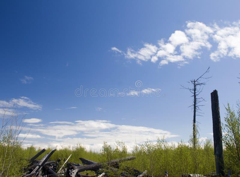 о вниз с древесины Лес после огня стоковые изображения rf