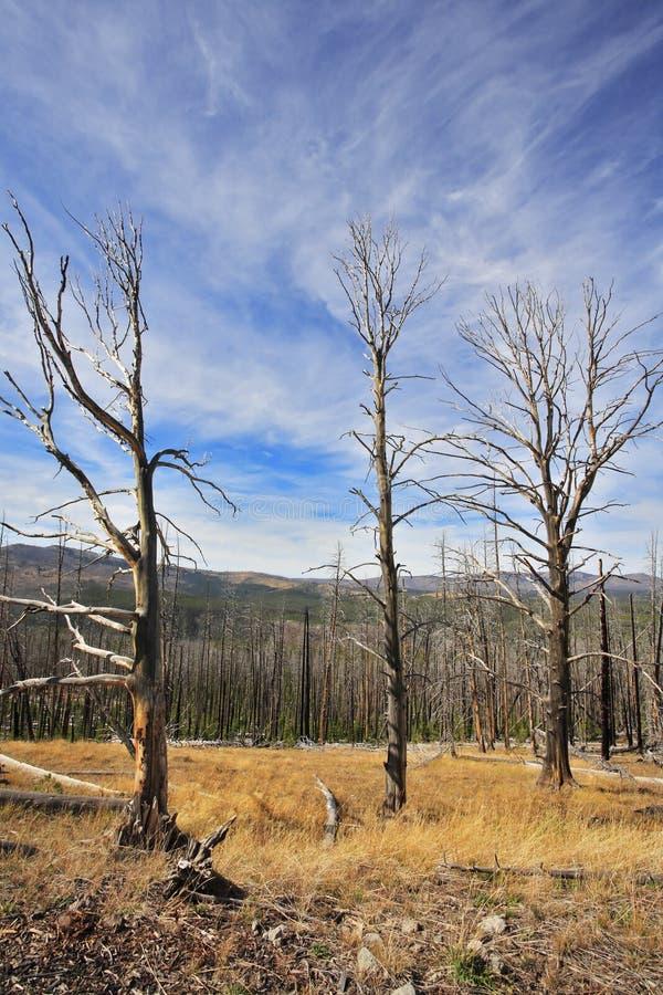 о вниз с древесины стоковое фото rf