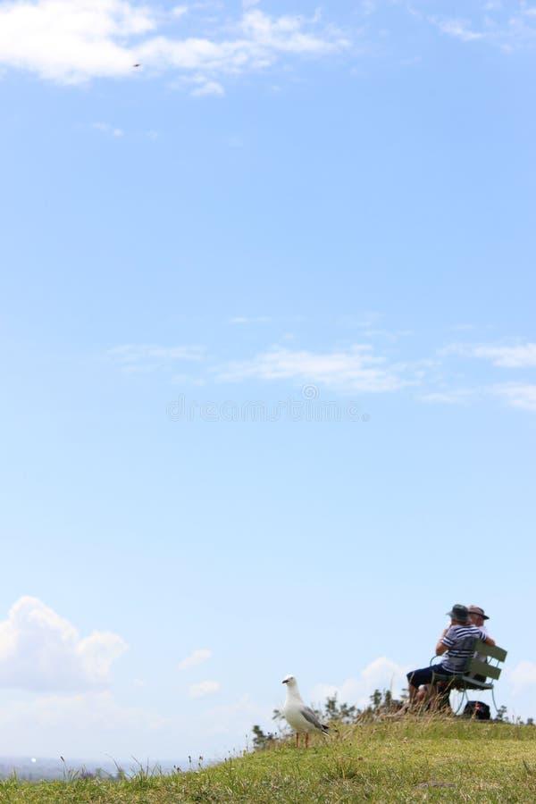 одевает поле одуванчика цветя детеныши белой женщины longhaired мира разума ослабляя стоковое фото rf