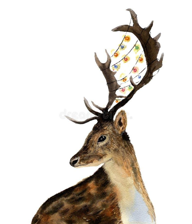 Олени акварели с гирляндой светов на рожках изолированных на белой предпосылке Иллюстрация дикого животного рождества для иллюстрация штока