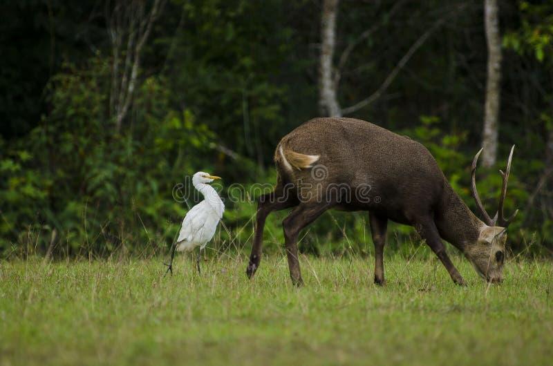 Олени борова зависимости с птицей стоковое изображение rf