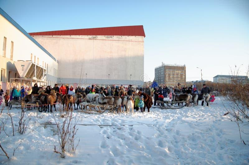 Олени в Vorkuta в зиме стоковые изображения