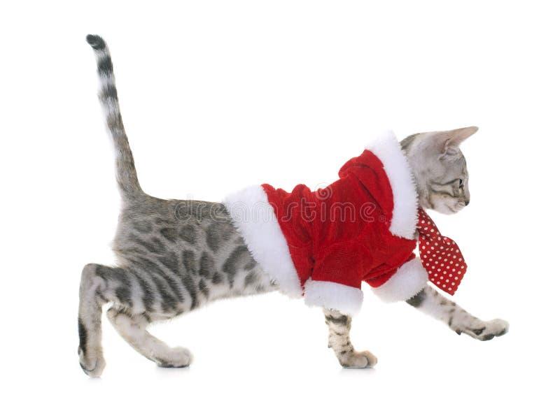 Одетый котенок Бенгалии стоковые изображения
