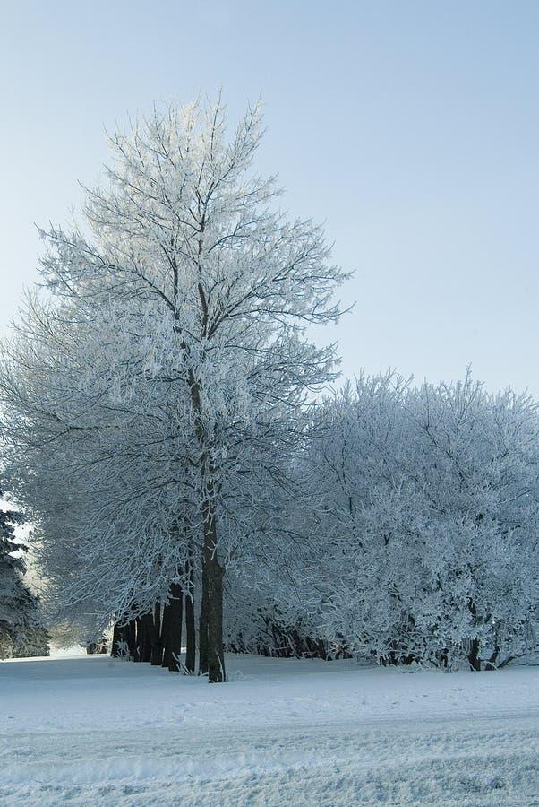 Зимняя роща стоковое изображение rf