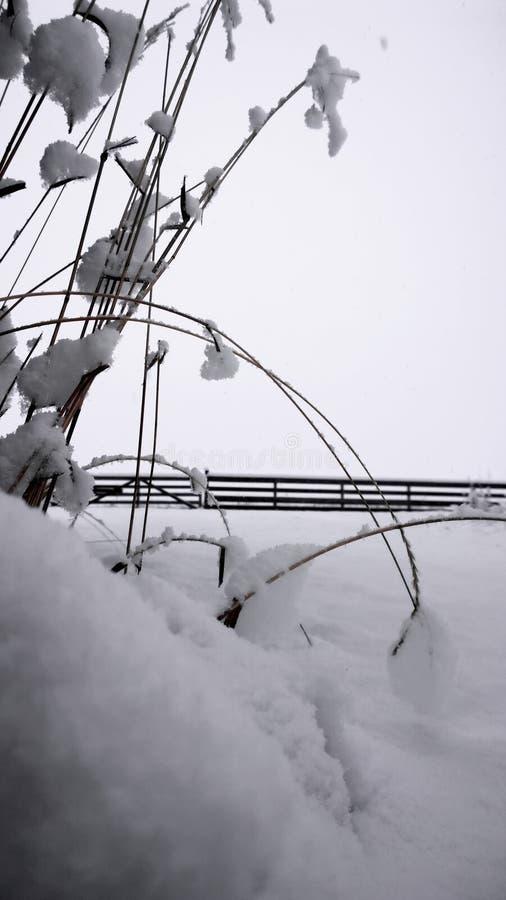 Одеяло снега стоковая фотография rf