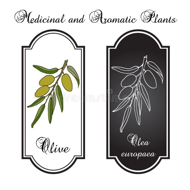 оливка ветви зеленая реалистическая бесплатная иллюстрация
