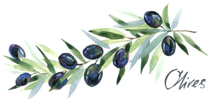 оливка Ветви оливок Оливковые ветки с оливками иллюстрация вектора