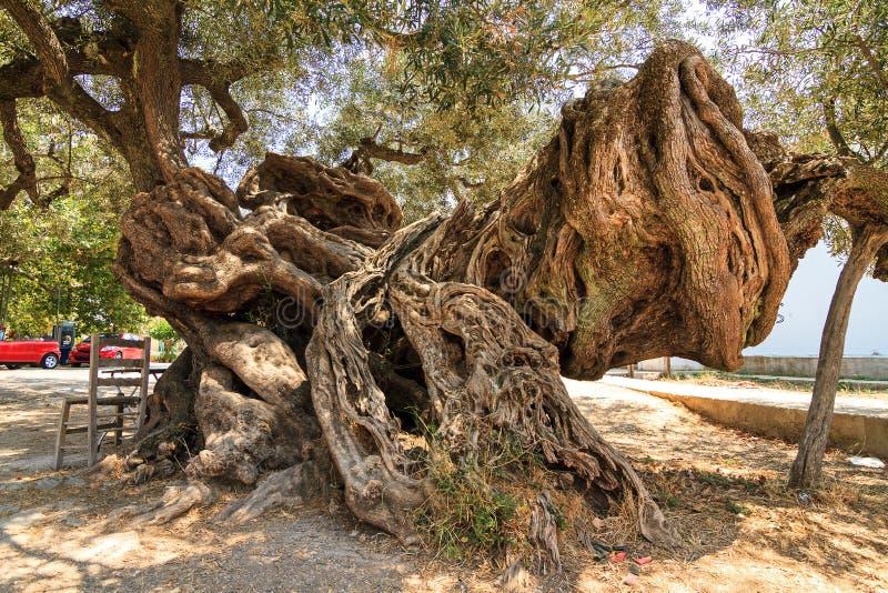 Оливка изверга стоковое изображение rf