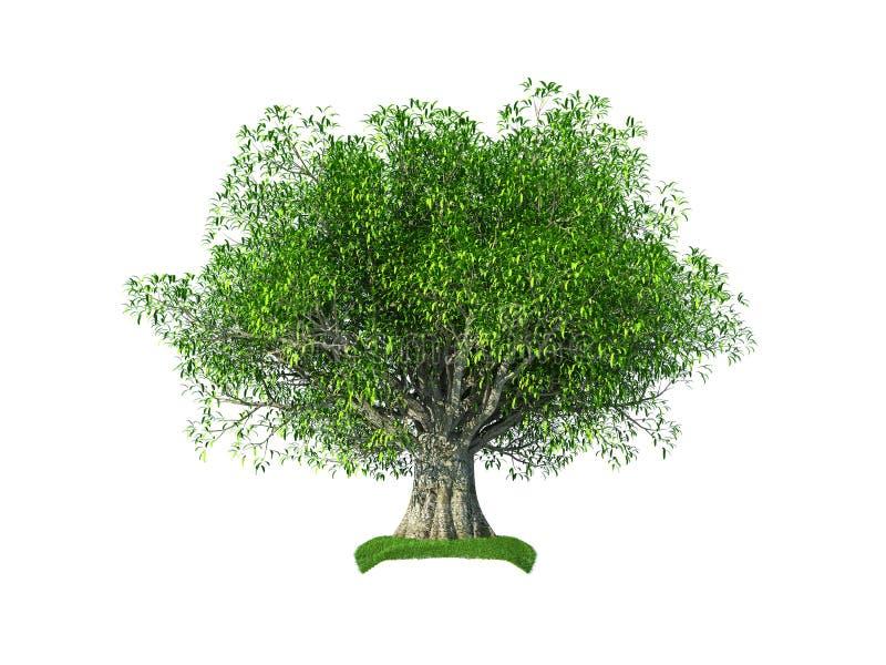оливковое дерево 3d иллюстрация вектора