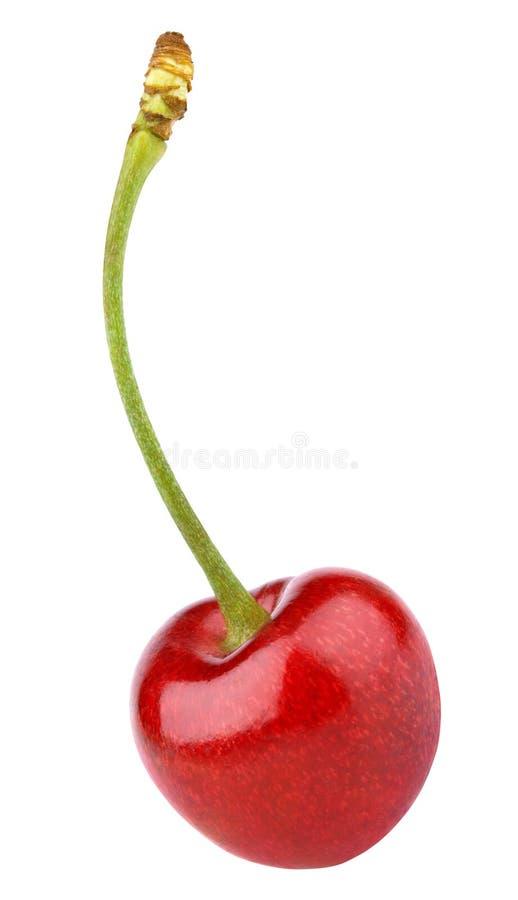 Одиночная красная ягода вишни изолированная на белизне стоковое фото
