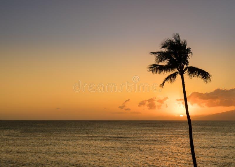 Одиночная пальма в силуэте в заходе солнца с Мауи стоковое фото