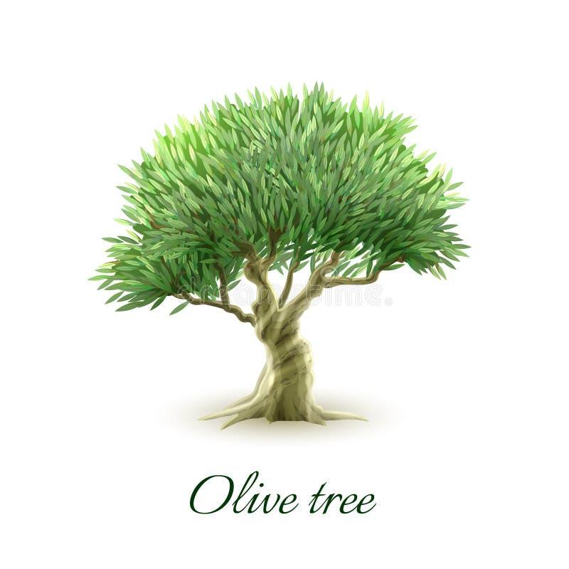 Одиночная печать изображения оливкового дерева иллюстрация вектора
