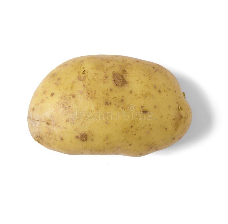 Одиночная сырая картошка выпечки стоковое фото rf