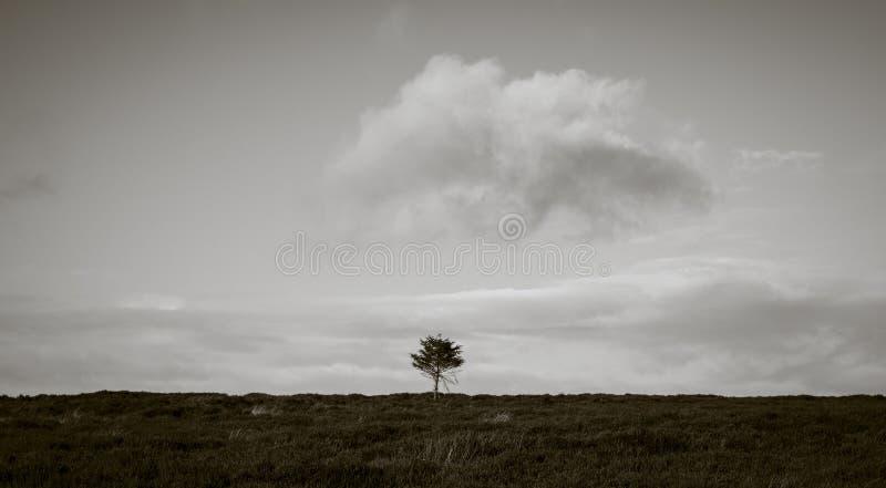 Одиночное дерево на причаливает стоковые изображения rf