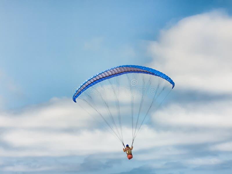 Одиночное Parakiter плавая над заливом Монтерей стоковое изображение
