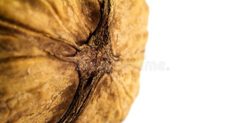 Одиночный грецкий орех изолированный на белой предпосылке, изображении макроса с космосом для текста стоковая фотография rf