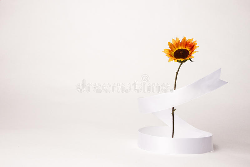 одиночный солнцецвет стоковые изображения rf