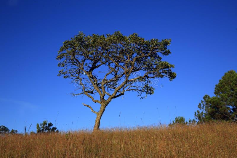 Один восход солнца дерева стоковое изображение