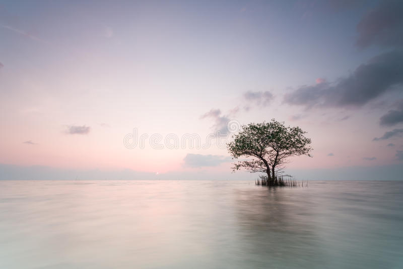 один красивейший вал захода солнца лета ландшафта зеленого цвета поля стоковые фото