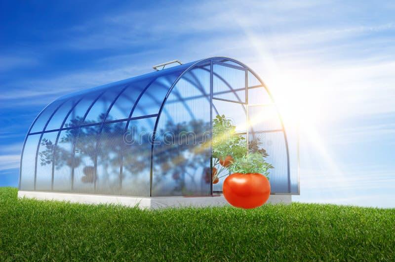 Один круглый парник с томатами стоковые фото