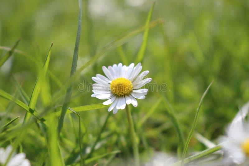 Один цветок стоковые изображения