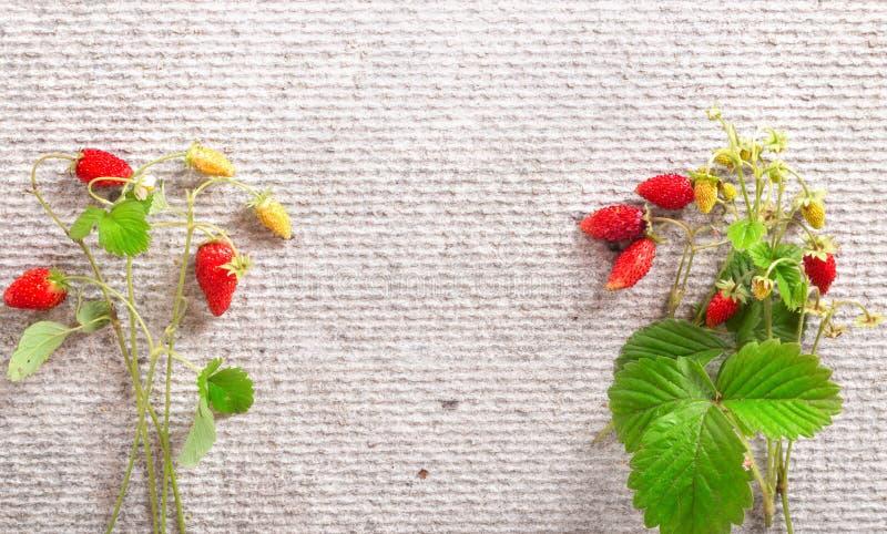 Одичалая клубника на серой предпосылке, плоское положение стоковая фотография