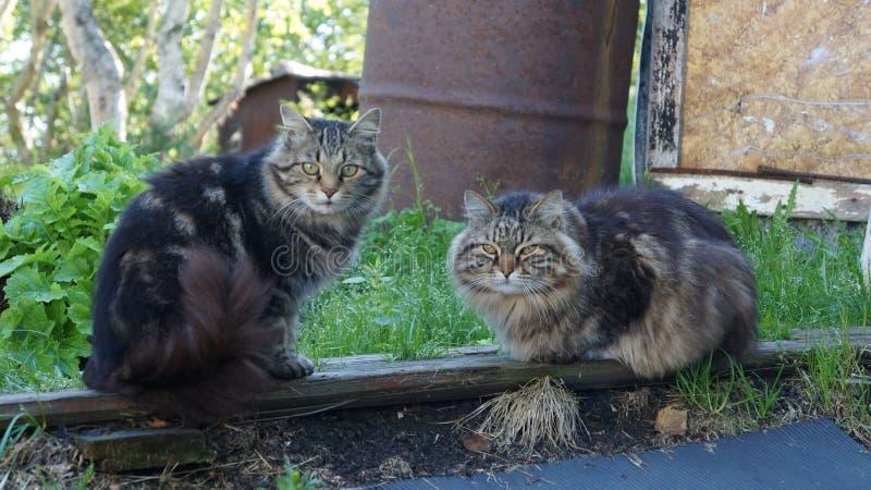 Одичалая семья кота стоковая фотография rf