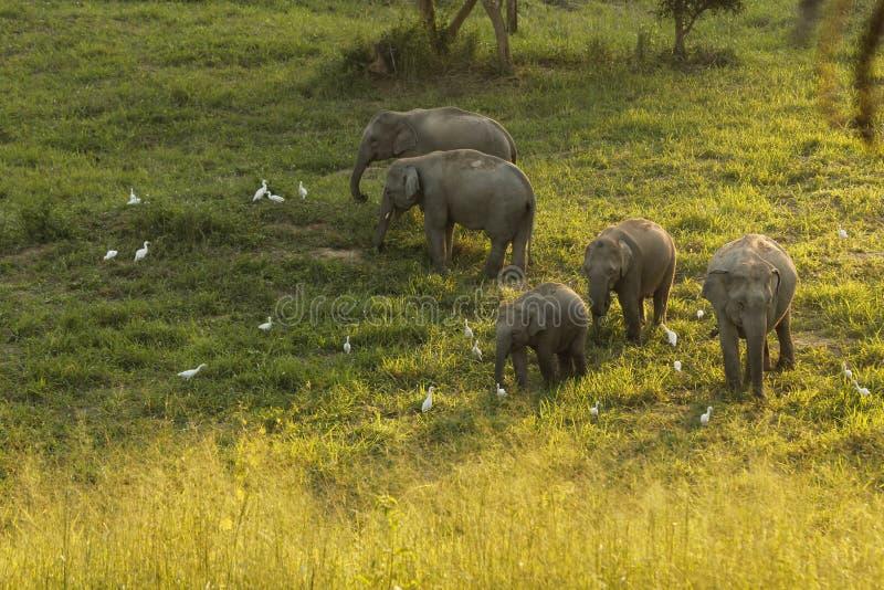 Одичалая семья слона стоковые изображения rf