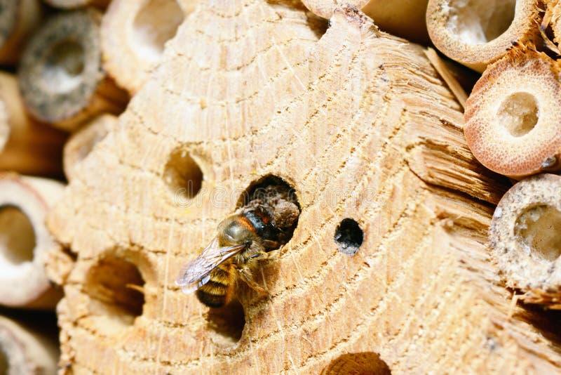 Одичалое гнездо пчелы на укрытии насекомого стоковая фотография