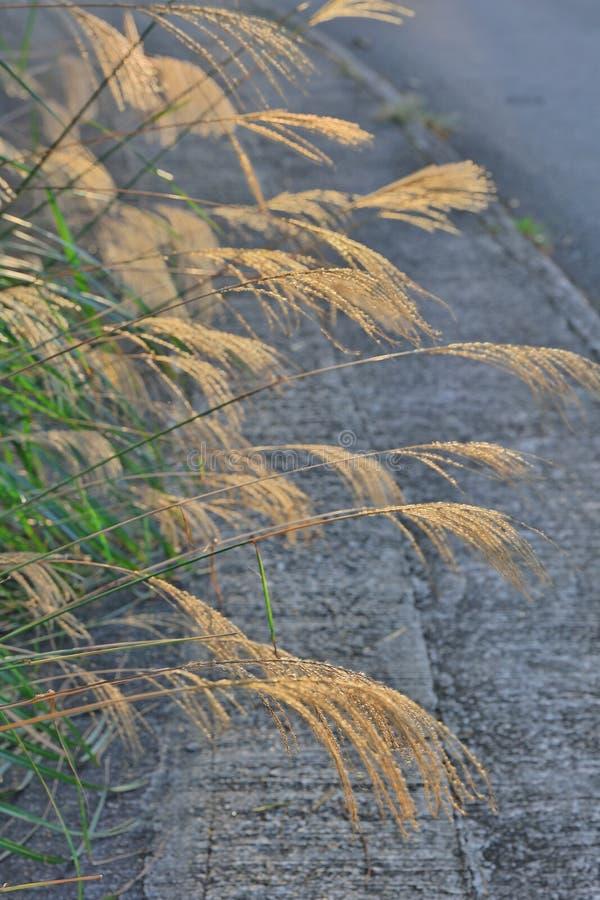 Одичалое поле травы на заходе солнца стоковые изображения rf