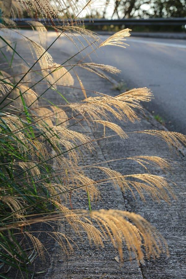 Одичалое поле травы на заходе солнца стоковая фотография rf