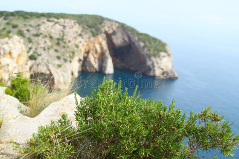 Одичалое розмариновое масло/officinalis Rosmarinus стоковое фото