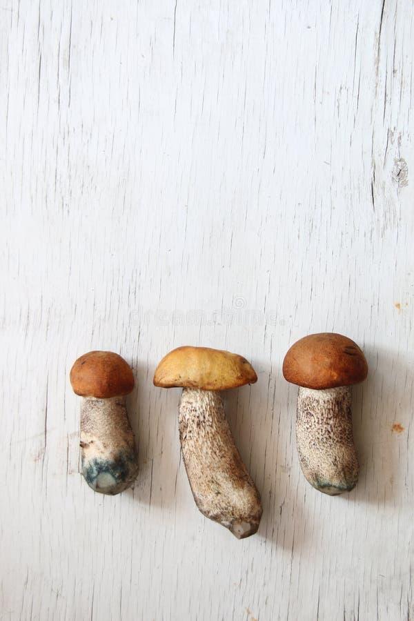 Одичалые грибы на таблице, предпосылка еды стоковое изображение rf