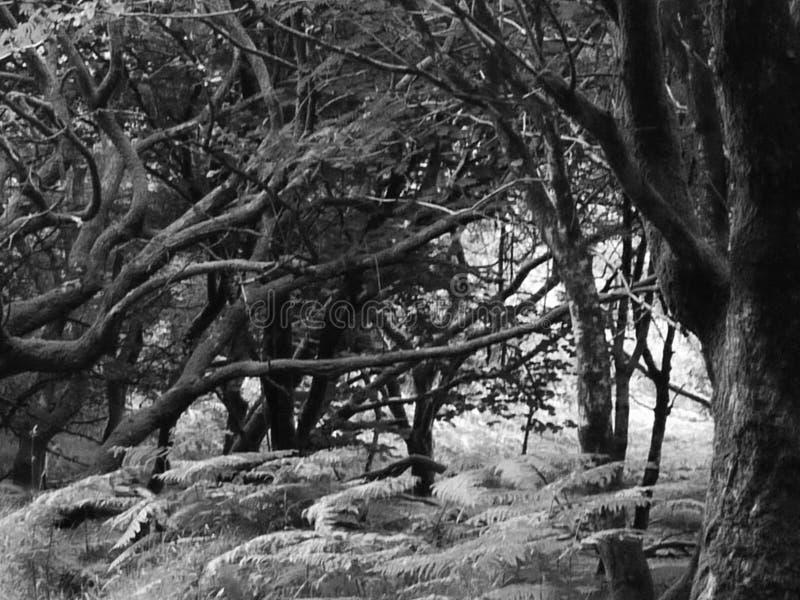 одичалые древесины стоковая фотография