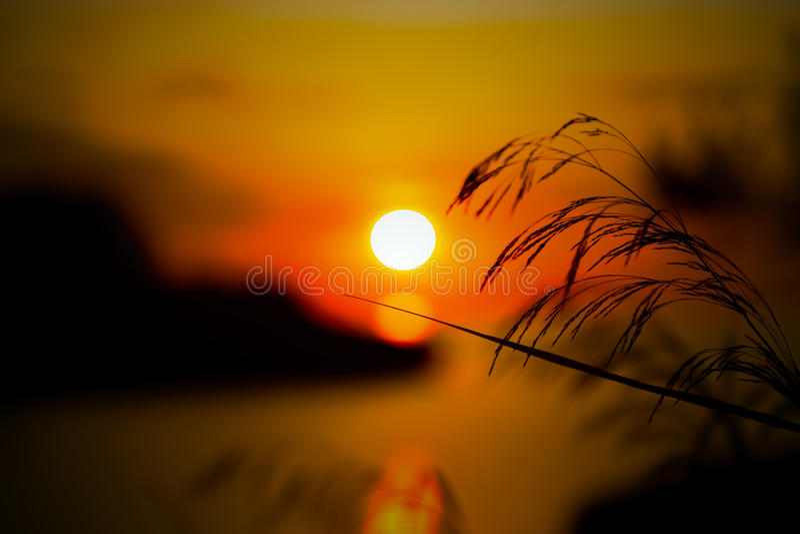 Download Одичалые травы и засорители в луге Стоковое Фото - изображение насчитывающей свет, горизонт: 41660294
