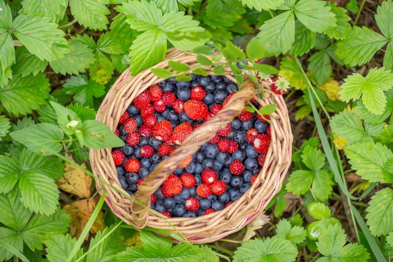 Одичалые ягоды в корзине на лесе засаживают крупный план предпосылки стоковое фото rf